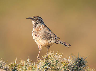 Photograph - Cactus Wren At Home by Loree Johnson