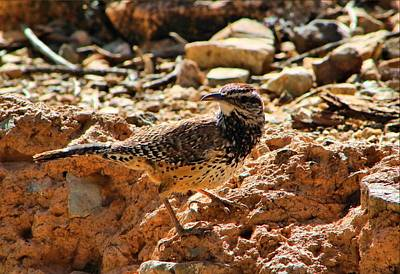 Photograph - Cactus Wren by Kathryn Meyer