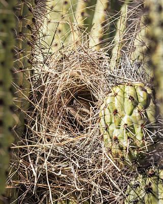 Photograph - Cactus Wren Nesting-img_407518 by Rosemary Woods-Desert Rose Images