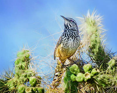 Photograph - Cactus Wren by Nikolyn McDonald