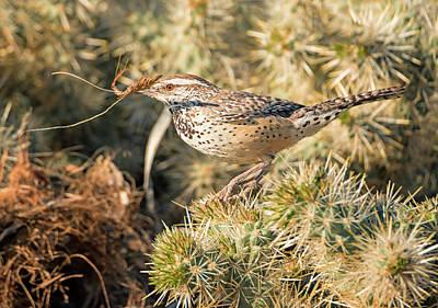 Desert Photograph - Cactus Wren Working On The Nest by Loree Johnson