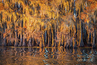 Caddo Lake Photograph - Caddo Abstract Trees by Inge Johnsson