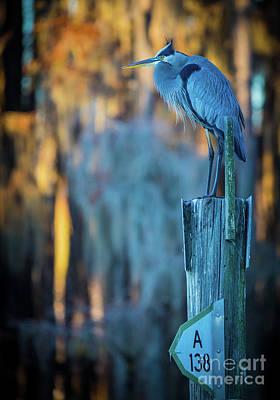 Caddo Lake Photograph - Caddo Blue Heron by Inge Johnsson