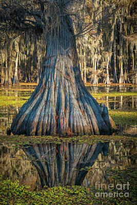 Photograph - Caddo Cypress Bottom by Inge Johnsson