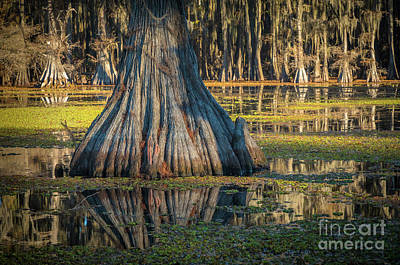 Photograph - Caddo Cypress Trunk by Inge Johnsson