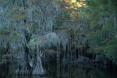 Photograph - Caddo Lake #2 by David Chasey