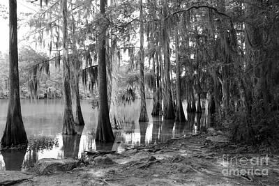 Photograph - Caddo Lake - Black And White by Carol Groenen