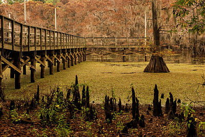 Photograph - Caddo Lake Bridge by Katherine Worley