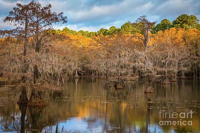 Caddo Lake Photograph - Caddo Lake Foliage by Inge Johnsson