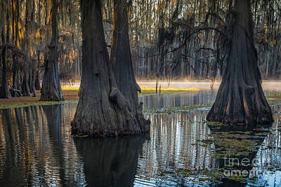 Photograph - Caddo Lake Grove by Inge Johnsson