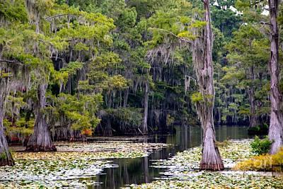Texas Lake Photograph - Caddo Lake by Linda James