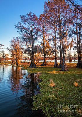 Caddo Lake Photograph - Caddo Lake Shoreline by Inge Johnsson