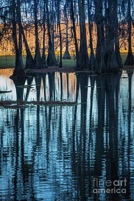 Caddo Lake Photograph - Caddo Long Shadows by Inge Johnsson