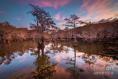 Photograph - Caddo Pink Dawn by Inge Johnsson