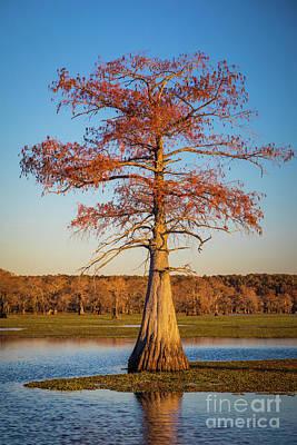 Caddo Lake Photograph - Caddo Single Cypress by Inge Johnsson