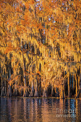 Photograph - Caddo Spanish Moss by Inge Johnsson