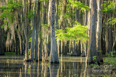 Photograph - Caddo Swamp 1 by David Cutts