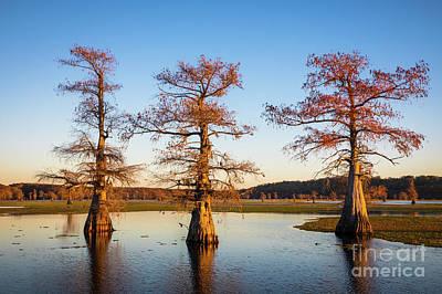 Caddo Lake Photograph - Caddo Three Trees by Inge Johnsson