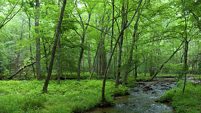 Photograph - Cade's Cove Stream And Forest by Cascade Colors