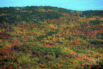 Photograph - Cadillac Mountain Autumn by Patti Whitten