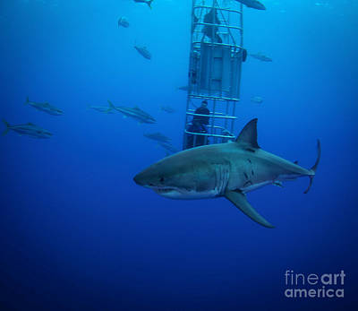 Cage Dive Photograph - Cage Time by Ryan Ware