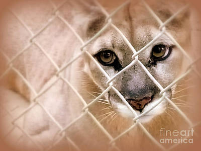 Photograph - Caged by C Ray Roth