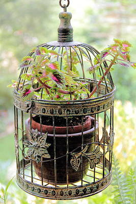 Photograph - Caged Coleus by Allen Nice-Webb