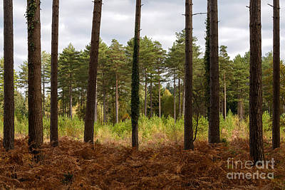 Bracken Fern Photograph - Caged In New Forest by Richard Thomas