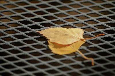 Photograph - Caged Leaf by Alex King