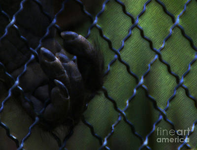 Photograph - Caged by Linda Shafer
