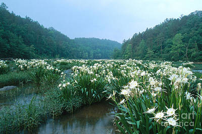 Hymenocallis Photograph - Cahaba River With Lilies by Jeffrey Lepore