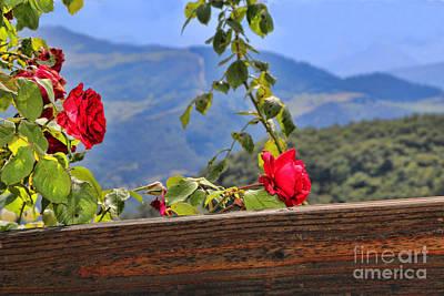 Photograph - Cahecho 155a7783a by Diana Raquel Sainz