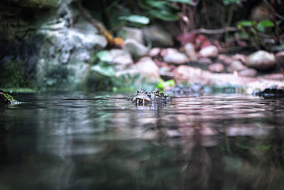 Photograph - Caiman by Traven Milovich
