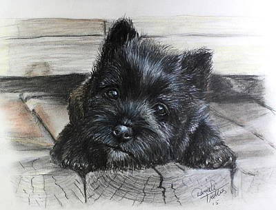 Cairn Terrier Original by Daniele Trottier