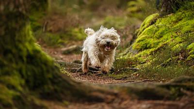 Buy Dog Art Photograph - Cairn Terrier In The Woods by Izzy Standbridge