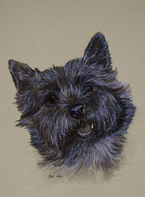 Drawing - Cairn Terrier by Susan Herber