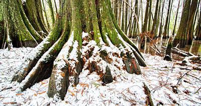 Photograph - Cajun Snowfall by Andy Crawford