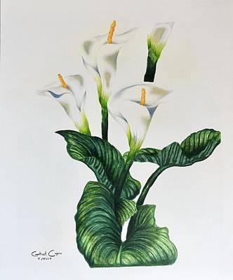 Drawing - Cala by Gabriel Cajina