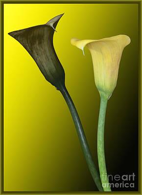 Cala Lilies Opposites Art Print