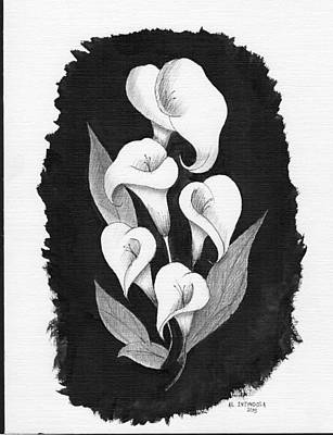 Drawing - Calla Lilly by Al Intindola