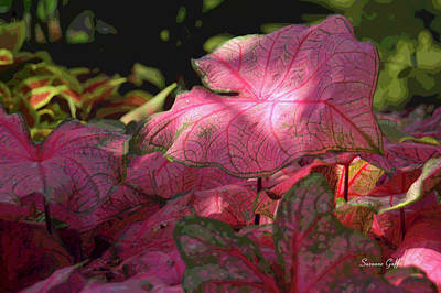 Caladiums Photograph - Caladium Carnival by Suzanne Gaff