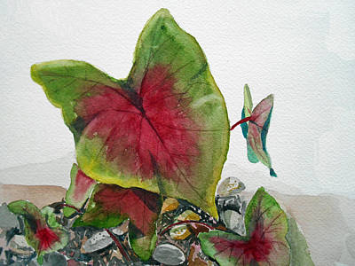 Painting - Caladium by Christine Lathrop