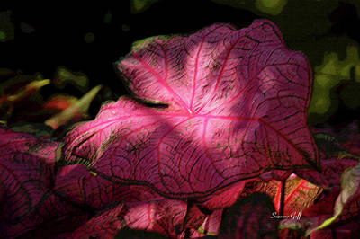 Caladiums Photograph - Caladium Mystery by Suzanne Gaff