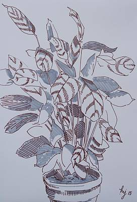Unusual Plants Drawing - Calathea - Marker Pen Drawing Of A Pot Plant by Mike Jory