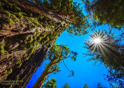 Photograph - Giant Sequoia Trees I by LeeAnn McLaneGoetz McLaneGoetzStudioLLCcom