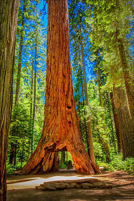 Photograph - Calaveras The Pioneer Cabin Tree  by LeeAnn McLaneGoetz McLaneGoetzStudioLLCcom