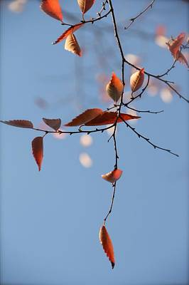 Photograph - Calder Leaves by Tracy Male