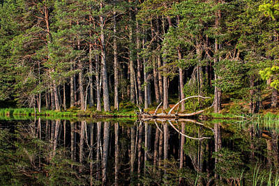Photograph - Caledonian Forest by Arterra Picture Library