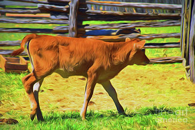 Photograph - Calf 11618 by Ray Shrewsberry