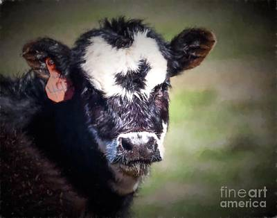Photograph - Calf Number 444 by Laurinda Bowling